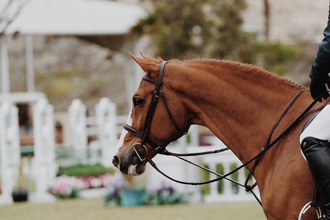 brown-horse-with-strings-1125062.jpg
