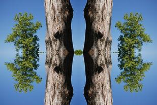 treecloseconnectraw.jpg