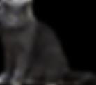 Cat_0,5x.png