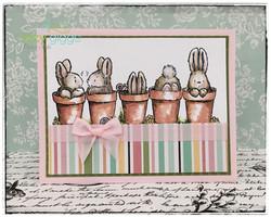 bunny row fb