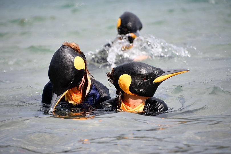Pinguine im Thunersee.jpg