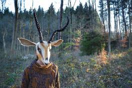 Gazelle Portrait