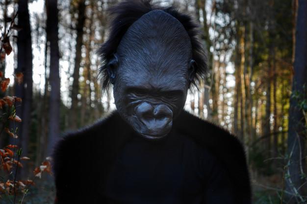 Berggorilla Portrait