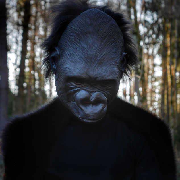 Berggorilla // Red-List Maskenprojekt
