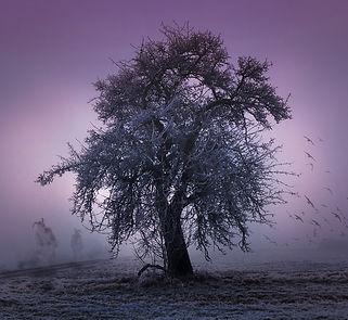 tree-2286510_1280.jpg