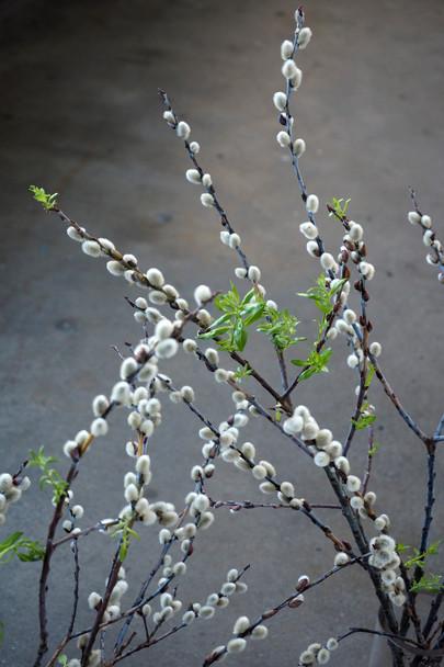 Weidenpflanzung am Bach