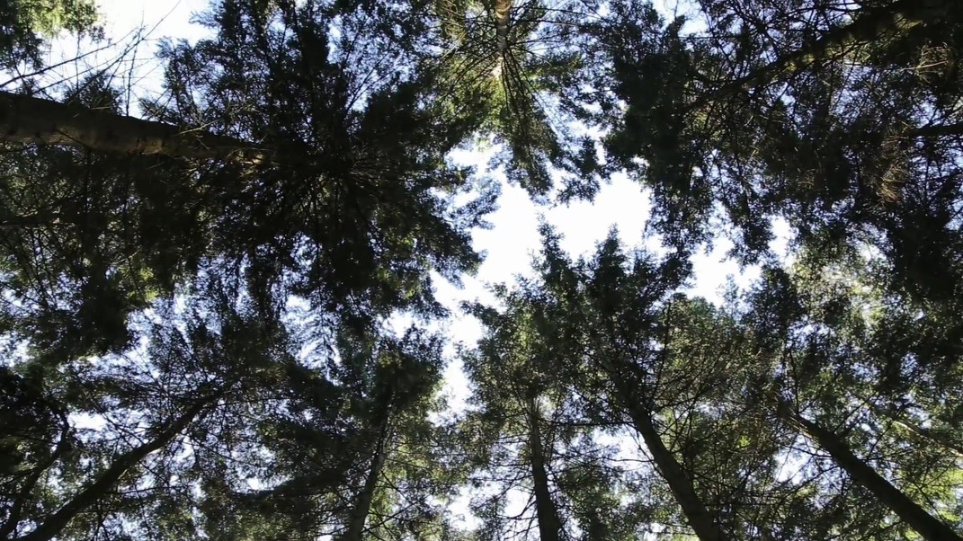 Baum Stimmen Score Bern.mp4