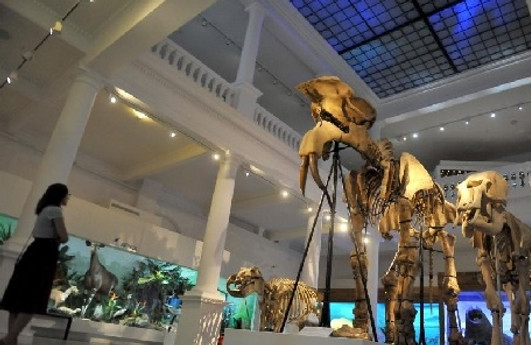 מוזיאון גריגורה אנטיפה בבוקרשט