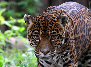 גן החיות בבוקרשט