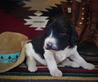 Teal girl 2 weeks old.jpg