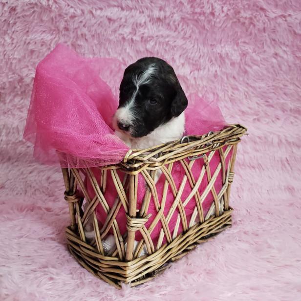 #8 Pink girl week 3 website.jpg