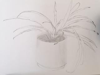Art VH - Planten en natuur