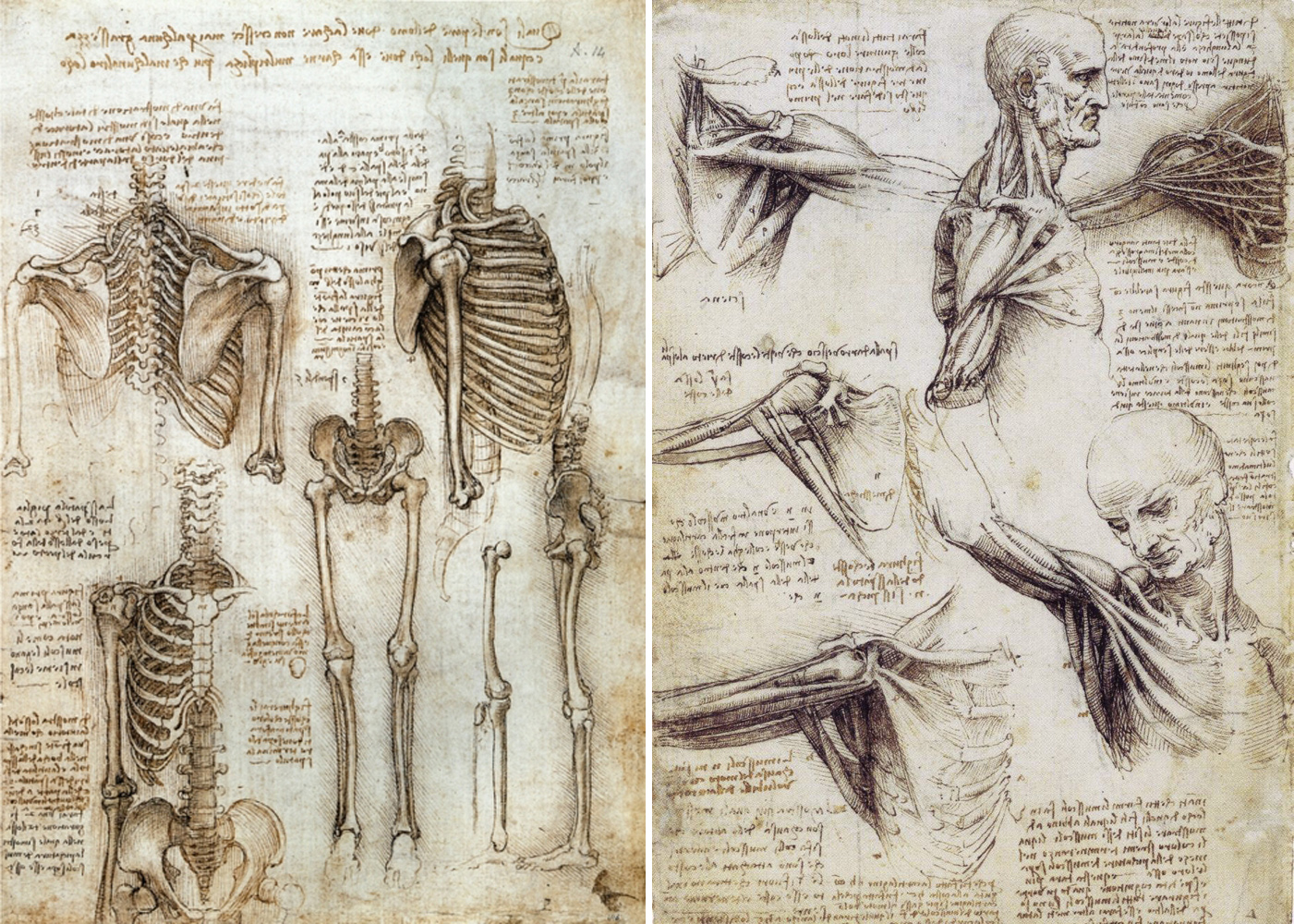 Leonardo Da Vinci And Dissection Artcrimearchive
