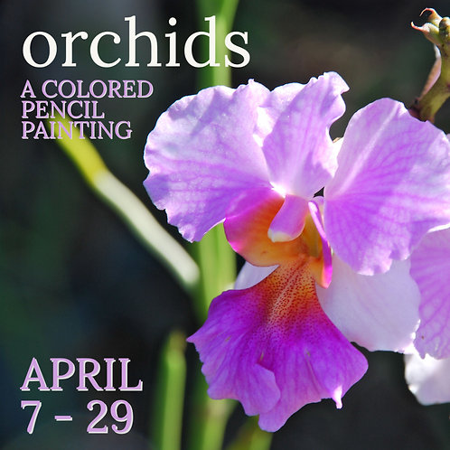 Orchids, a Colored Pencil Painting