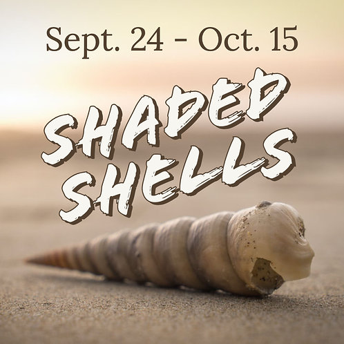 """""""Shaded Shells"""" - A Large Charcoal Drawing"""