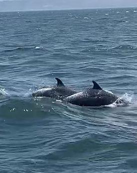 Dolphins Zoom.jpg