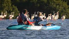 Kayaking with Flamingos