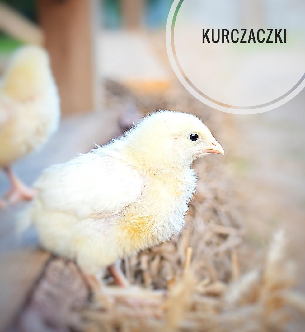 Kurczaczki Minigolf.jpg
