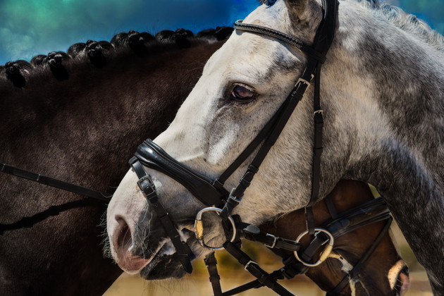 ∂ances with Horses '18-1.jpg