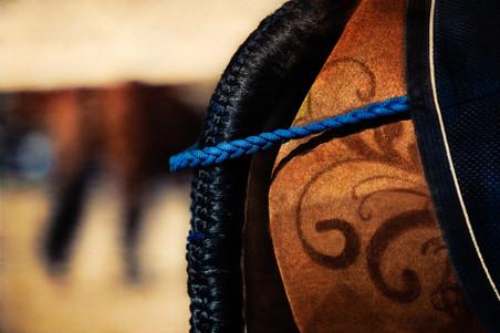 Horses-29.jpg