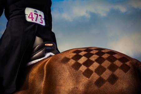 Horses-15.jpg