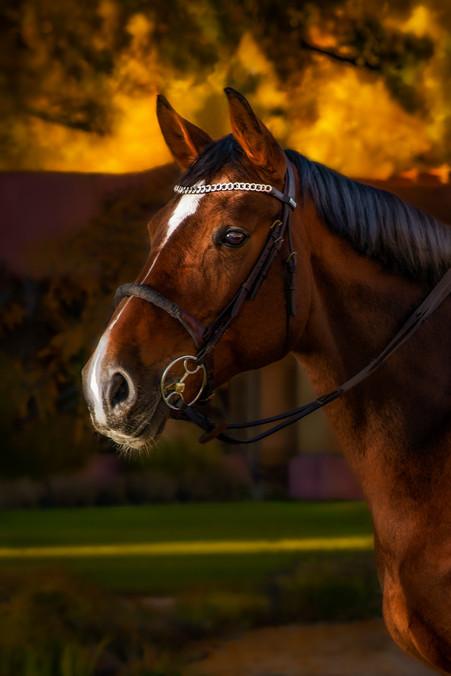 Horses-33.jpg
