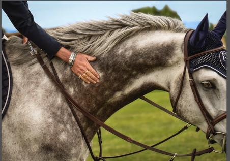 Horses-39.jpg