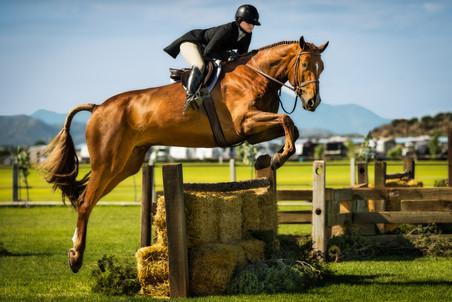 Horses-31.jpg