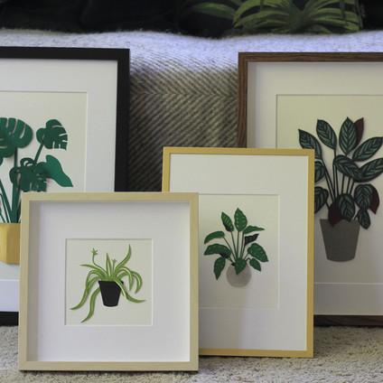 Framed Plant Papercut Illustrations