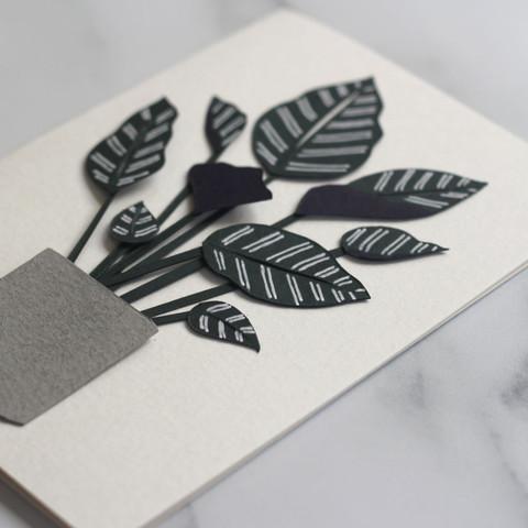 Pinstripe Calathea Houseplant Papercut