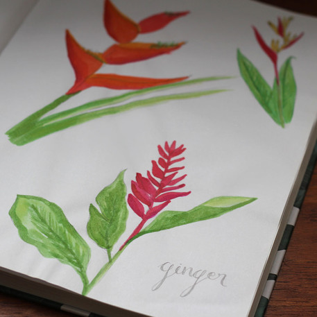 Ink Drawing of Costa Rican Flora