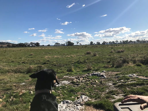 Farm study with Year 11