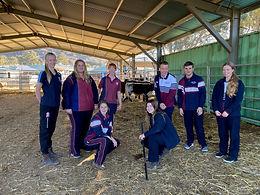 Cattle team update
