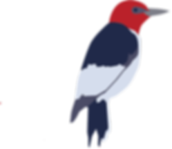 woodpecker new.png