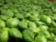 basil_pistou_plants_garden_green_vegetab