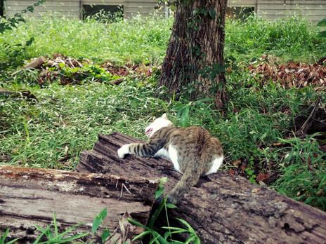 木に狂う猫