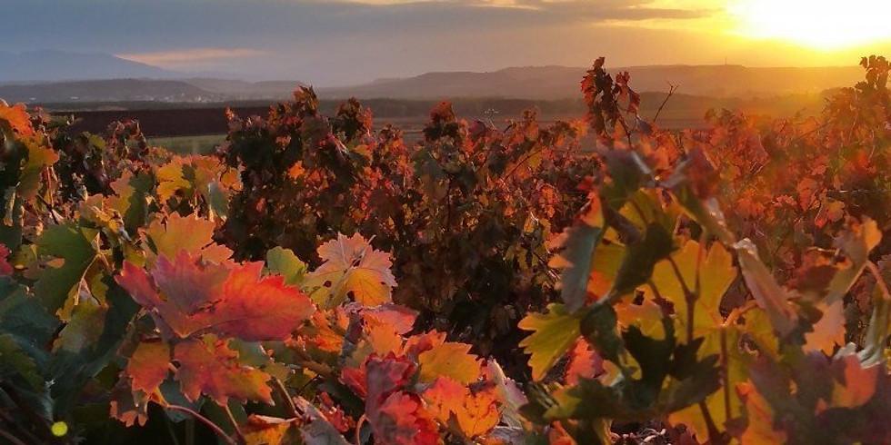 Autumn colours at vineyard Chateau Roubine
