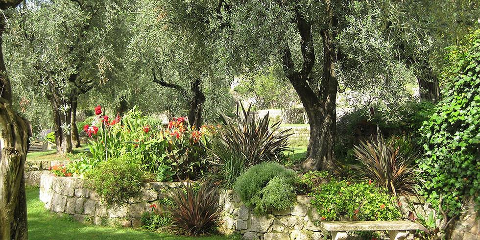 Flowers painting in garden La Mouissone