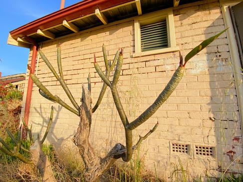 17 - Como House Deceased Estate