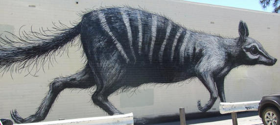 A 25m numbat mural by ROA on Henderson Street Mall in Fremantle - 12 December 2013