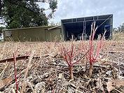 10 - Cockburn Abandoned Sheds