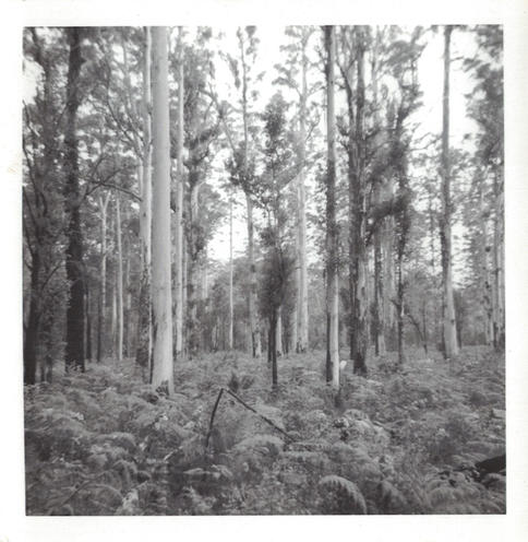 09 - View of the bush