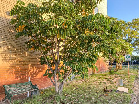 01 - Nedlands REGIS Wyvern Aged Care Apartments