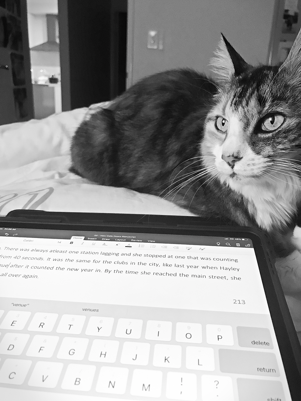 Tortoiseshell cat Roadie from Port Hedland Western Australia keeps me warm and good company whilst I write pages of new scenes for the book