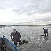 mussel men.jpg
