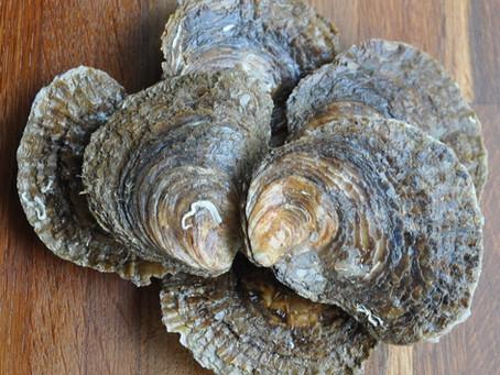 Brancaster Oyster Farming