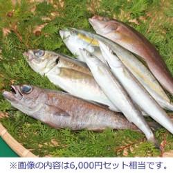 伊勢志摩の鮮魚丸義商店