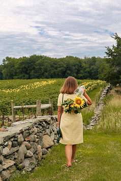 The-Sunflower-Fields-at-Buttonwood-Farm-