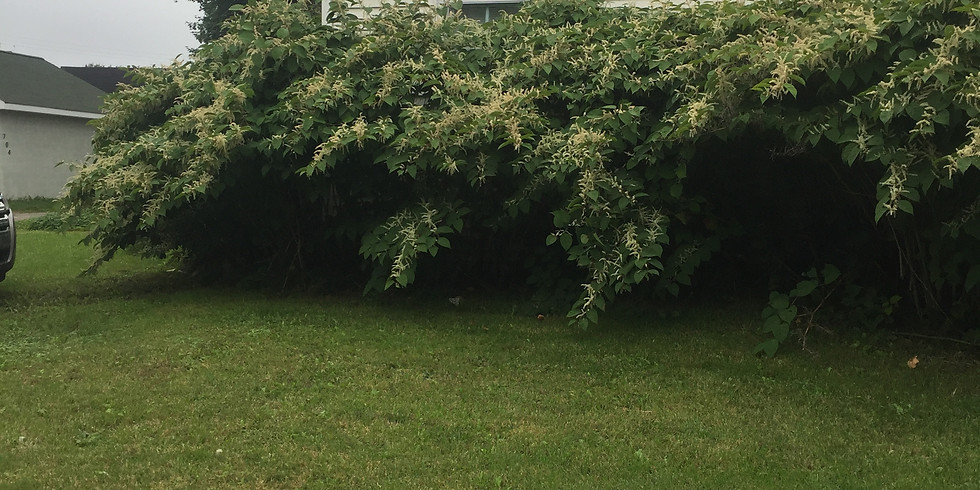 What's Trespassing in your Backyard? - Saint Ignace