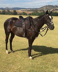 Glen Gilmore AP saddle.JPG
